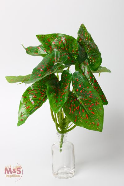 Aronstab rot gepunktet / Caladium with red spots 20x20x30 cm ( 171160 )